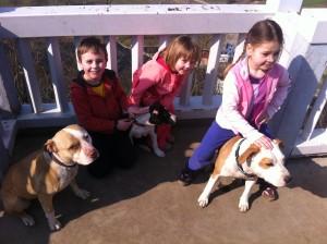 Naši nejmenší členové a krvelační bojoví psi!!! :D